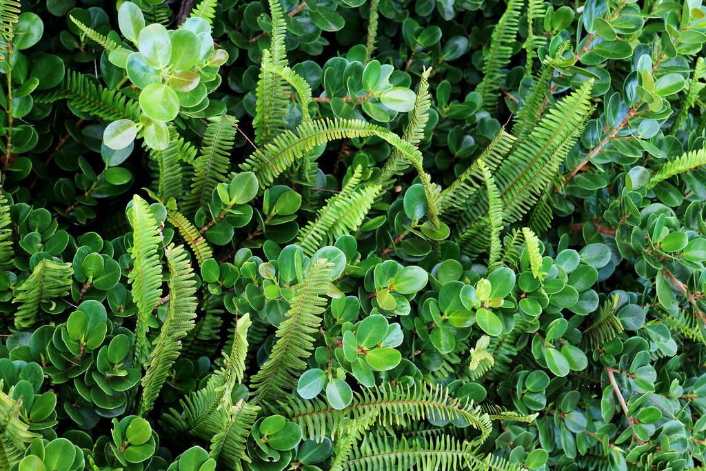 Australian Green Plants, Ferns and Foliage