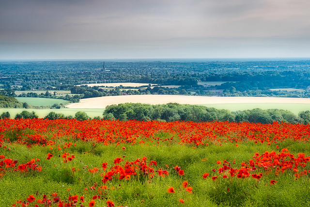 Chichester Cathedral from a poppy field. [explored 28-06-2021]