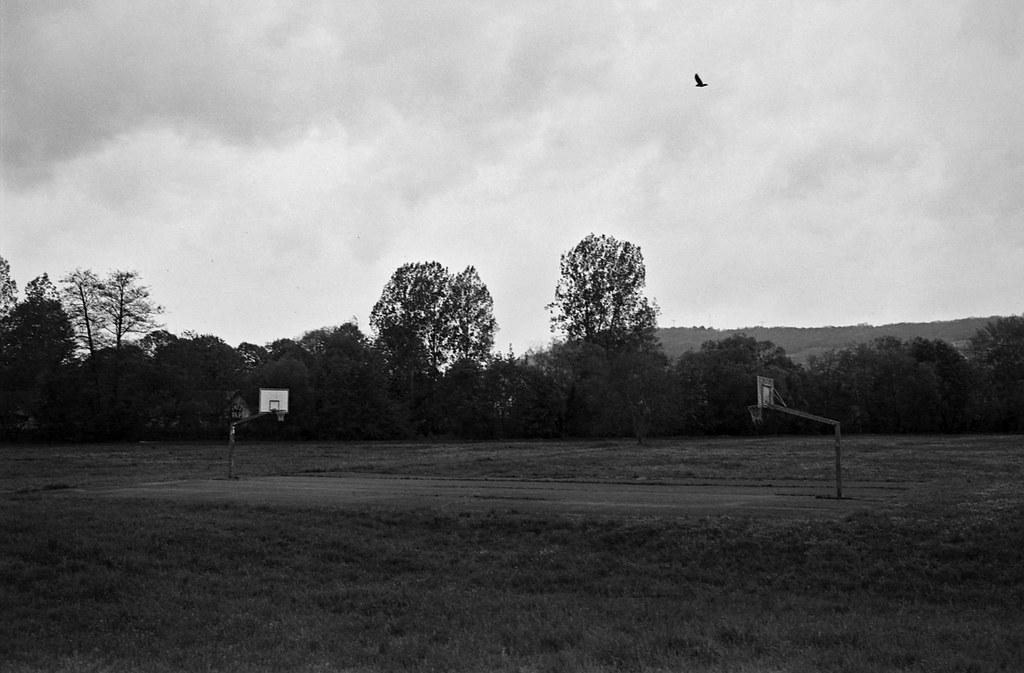 rainbirds