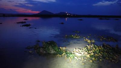 Living shores of Beting Bronok, Jun 2021