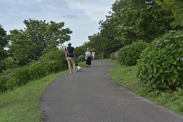 大乗寺山公園