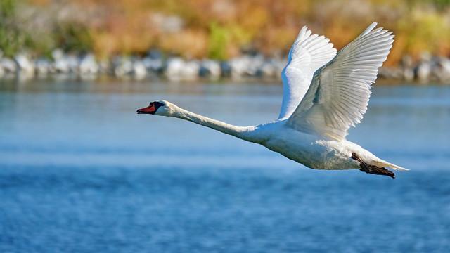 Full speed across the pond