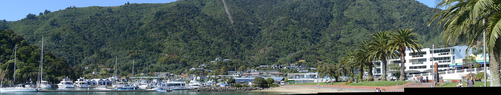 Regenerating forest on Picton's hills