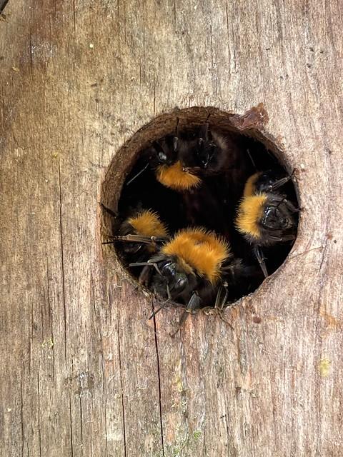 Bee Watch!