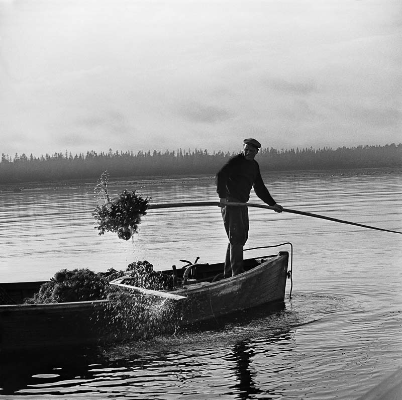 06. 1960. Сбор урожая