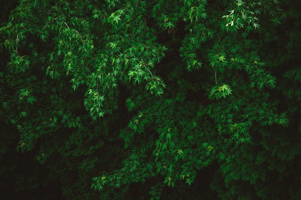 市民四季の森