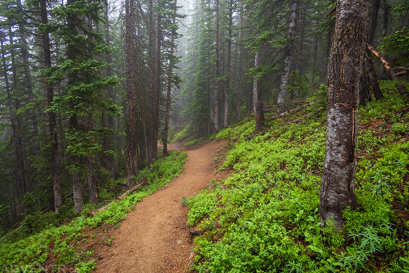 Forest Trail in the Clouds