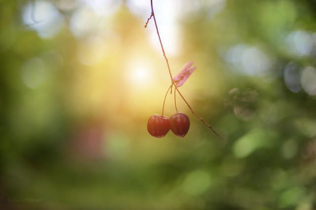 ...Cherry Tree 🍒…