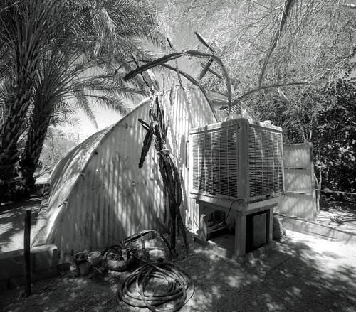 Moorten's Greenhouse (1)