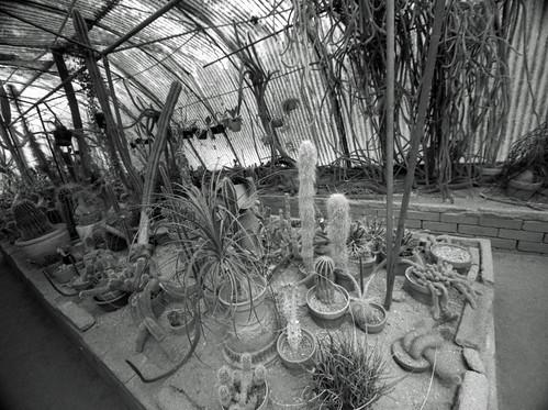 Moorten Botanical Garden (5)