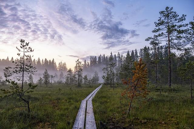 Path through fog