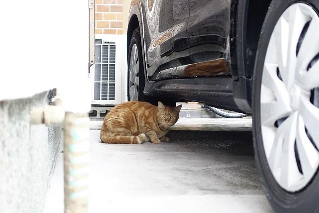 Today's Cat@2021−06−29