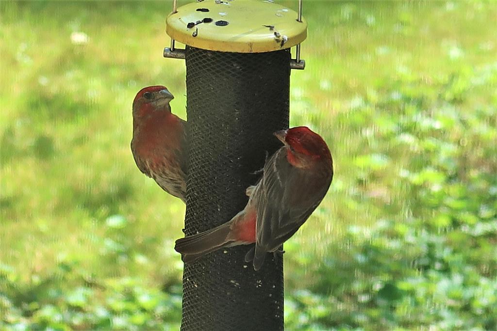 Crazy Tuesday ~ Birds