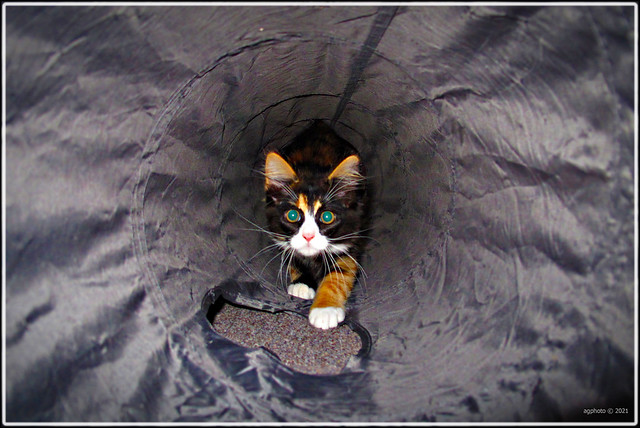 The tunnel rat....:D