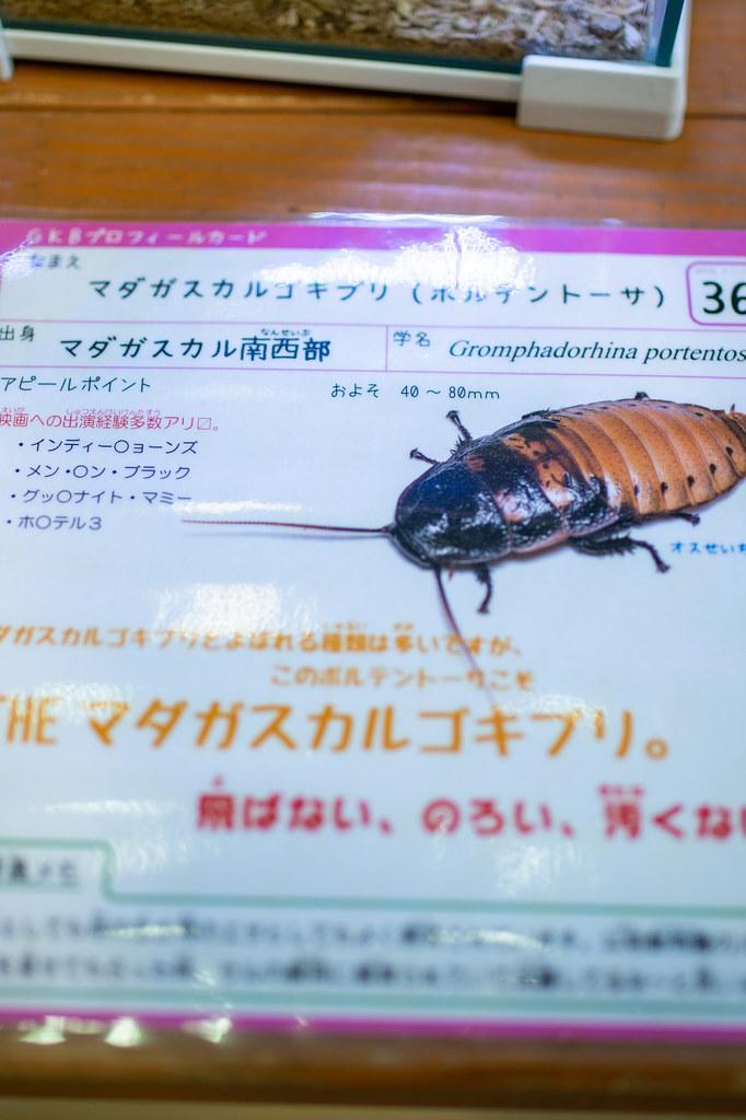 2021-06-27 竜洋昆虫自然観察公園