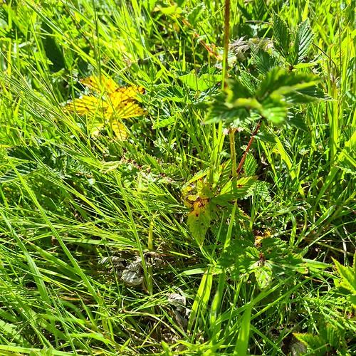 blurry meadowsweet feel free to delete 3