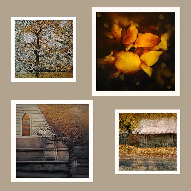 Yellow series ... Beechworth's Autumn 2021