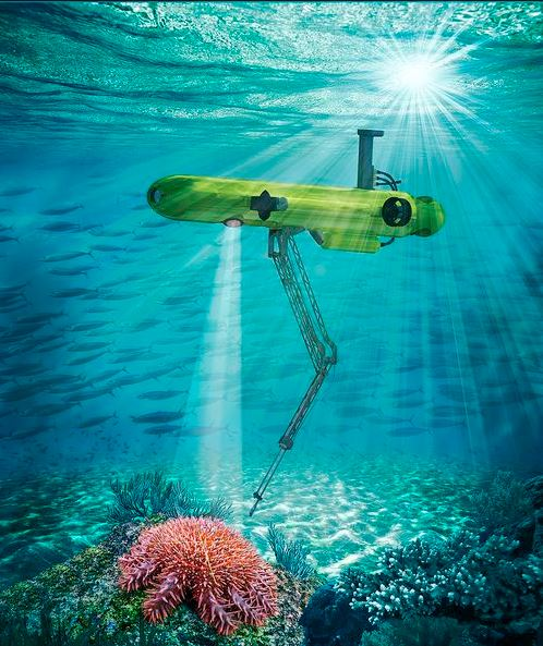20210630「太平島棘冠海星大爆發逾9成海底珊瑚礁死亡」記者會。機械手臂將醋酸注入棘冠海星。照片提供:鄭明修