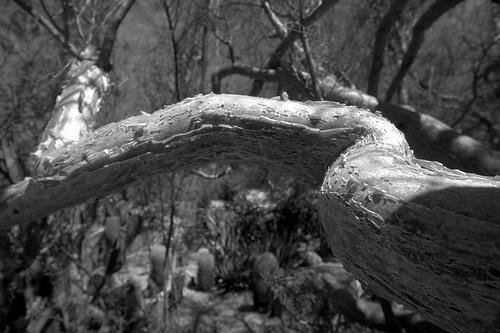 Moorten Botanical Garden (15)