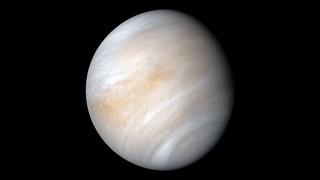 La vita su Venere potrebbe essere un nuovo tipo di organismo mai visto prima