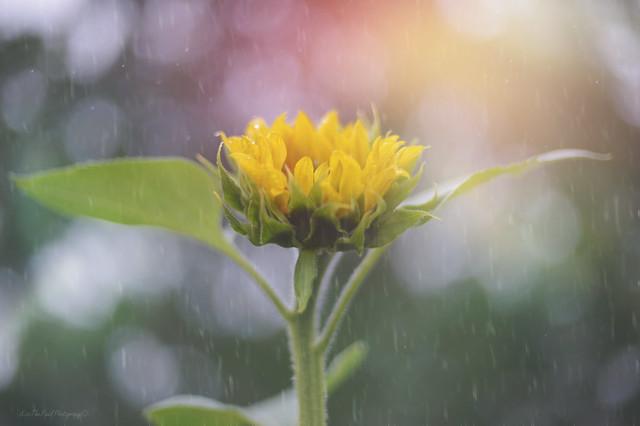 Rainflower...