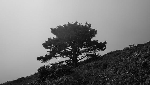 San Bruno Mountain, California