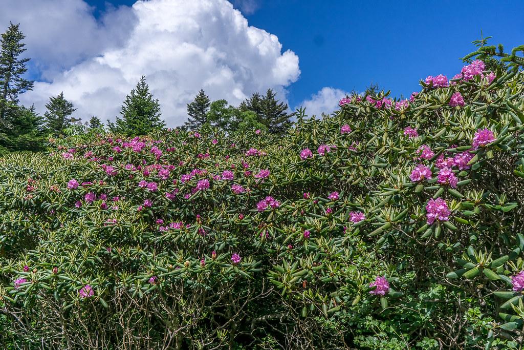 Rhododendron Gardens 3
