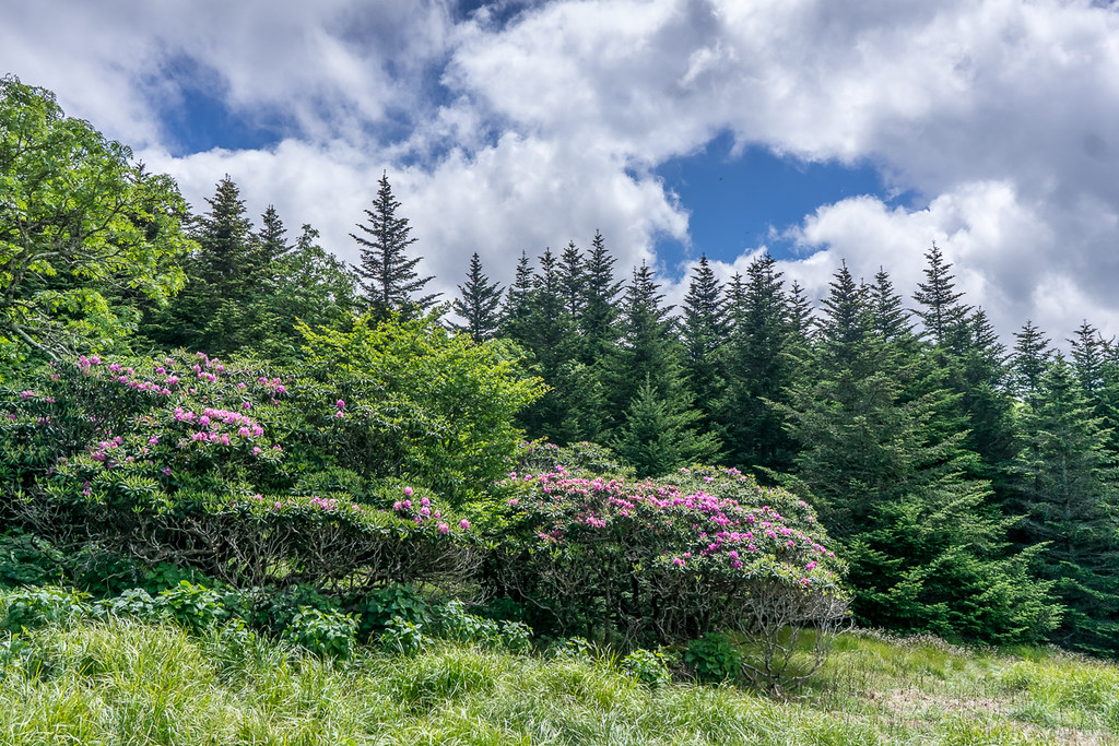Rhododendron Gardens 2