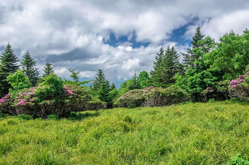 Rhododendron Gardens 1