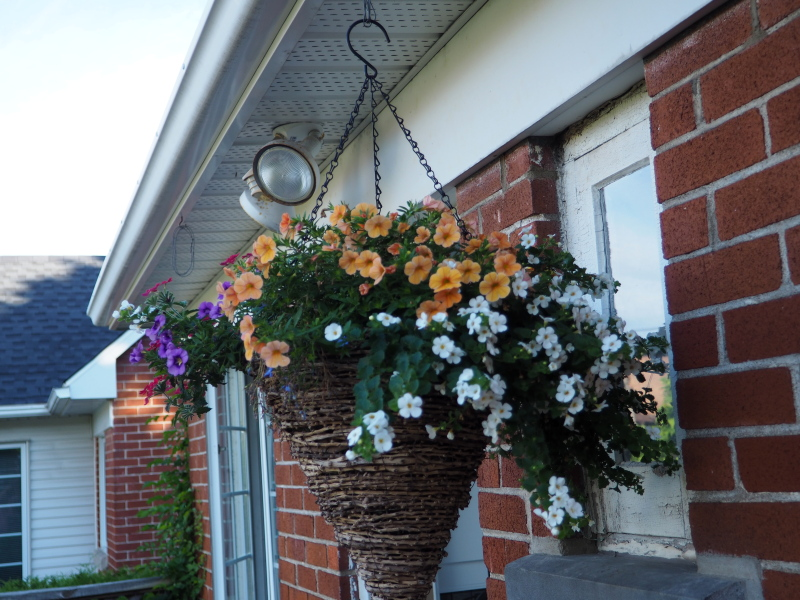 Pots et jardinières 2021 51282132057_f43cfc57f6_o