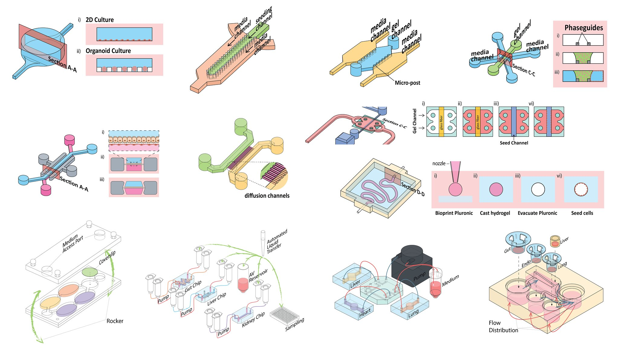 Opinion on Translation of Organ-on-a-chip Platforms Published