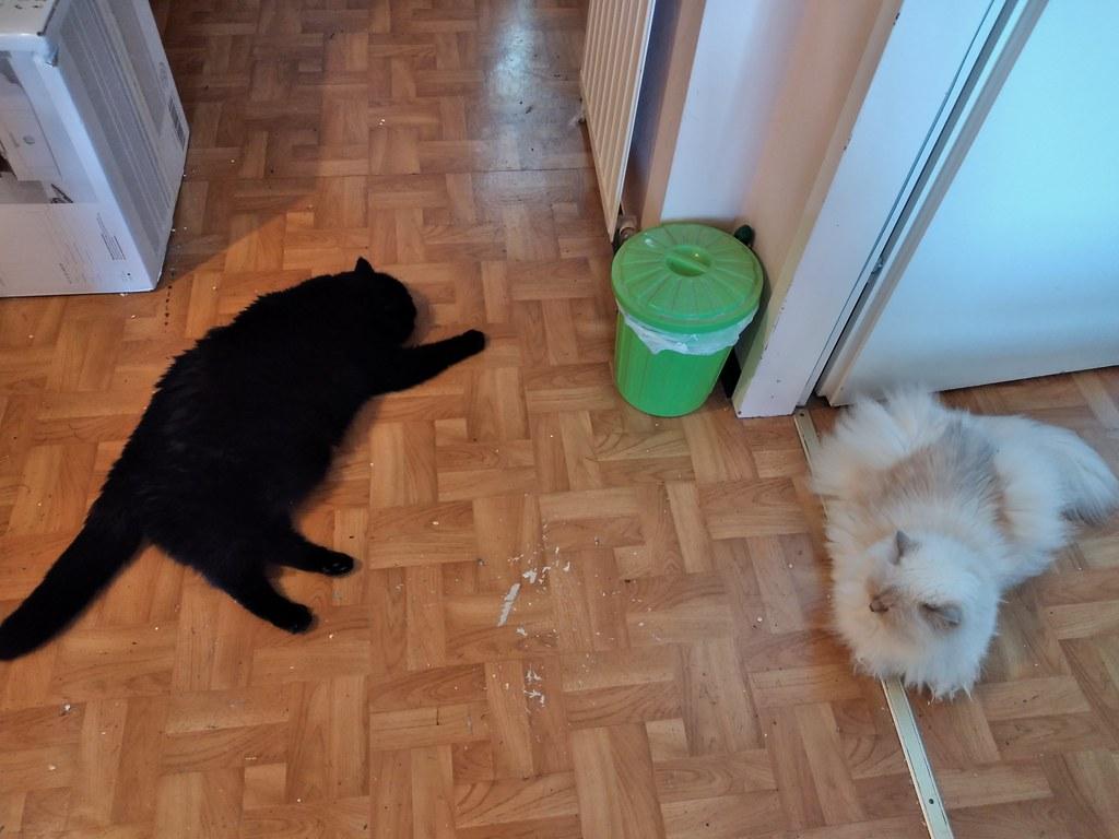 Sirius und Jessie am 27.06.21