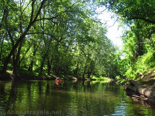 Quiet water above the second log jam, Honeoye Creek, New York