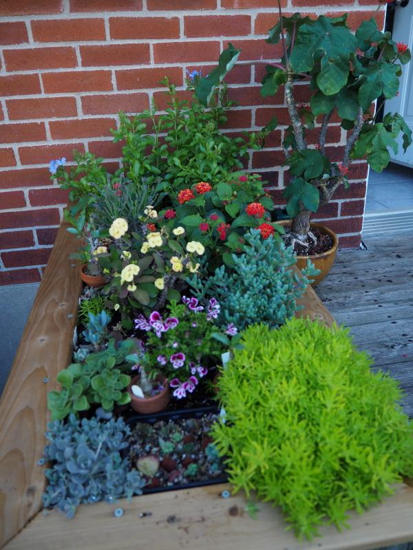 Pots et jardinières 2021 51282876256_75c4de4c37_o
