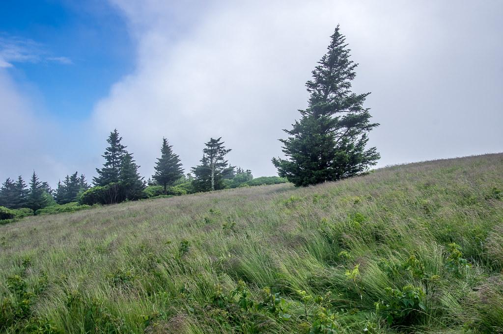 At the Grassy Ridge