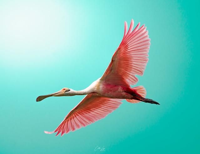 Rose Flight