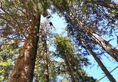 Volný pád z 20 metrů v lanovém parku