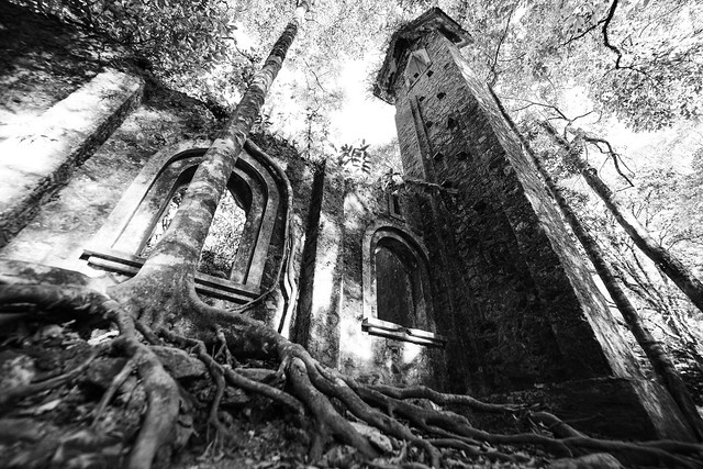 ruin house in forest
