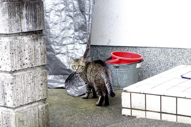 Today's Cat@2021−07−01