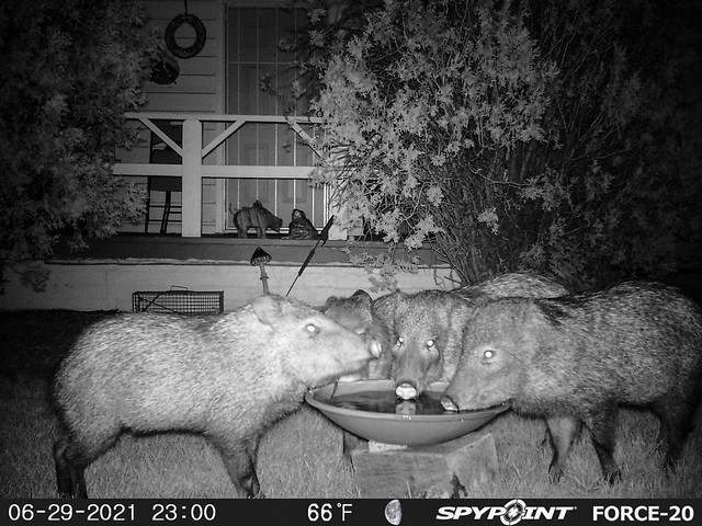Trail and Game Camera