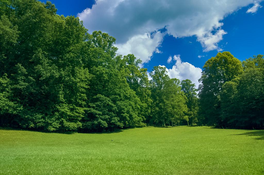Landscape 60