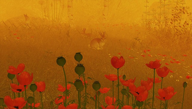 a shy rabbit ... with poppies