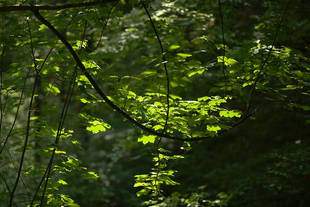 Erfrischung im Wald