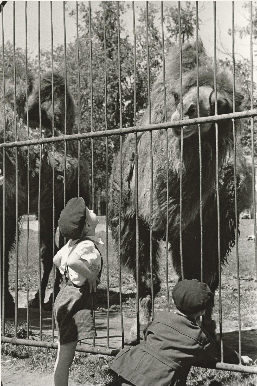 1957. Московский зоопарк