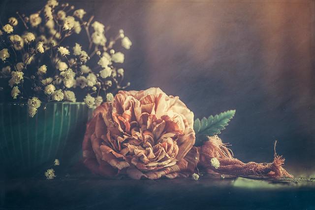 Rose Still Life
