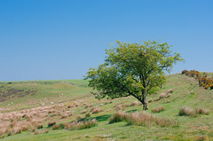 Newtondale, North Yorkshire 51
