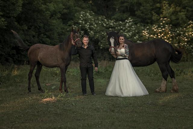 Ślubna sesja z końmi