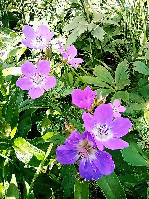 07.02.21.Fleurs Sauvages