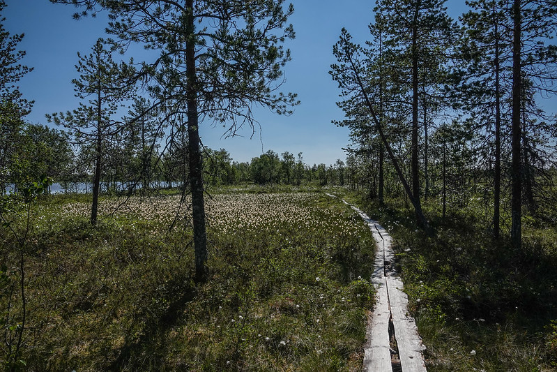 Hiking path next to Ylläslompolo lake
