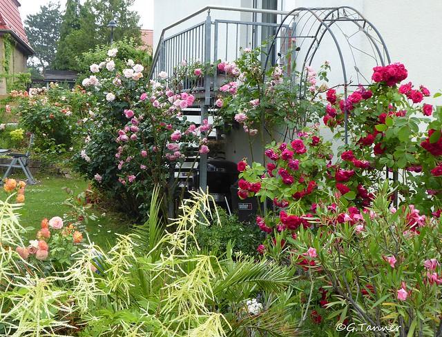 Mein Rosengarten 2021